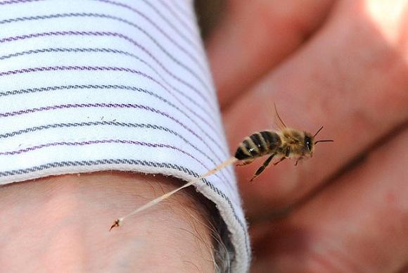 abeja picando