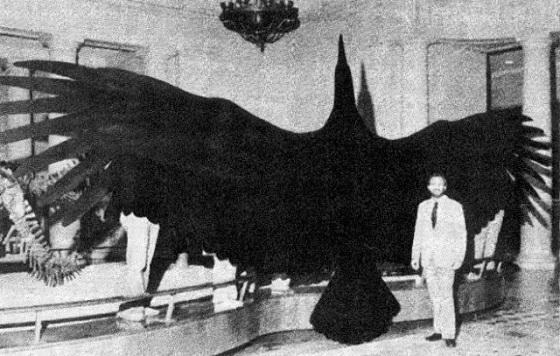 ave mas grande del mundo