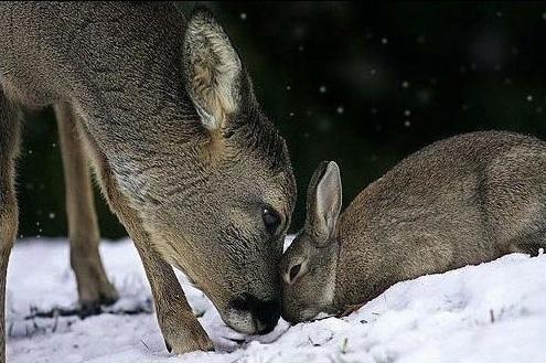 bambi y tambor reales