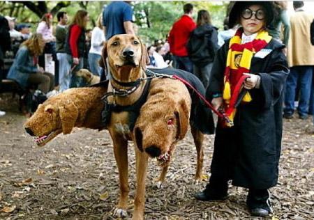 disfraz perro