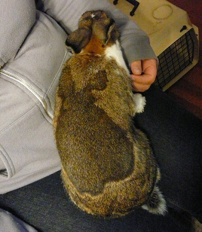 dos conejos