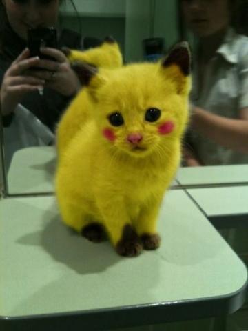 gato pikachu
