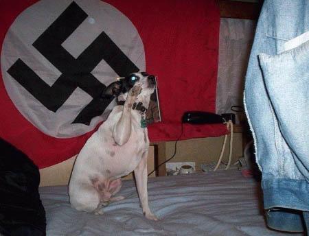 perro bandera nazi