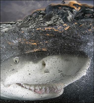 tiburon sonrisa